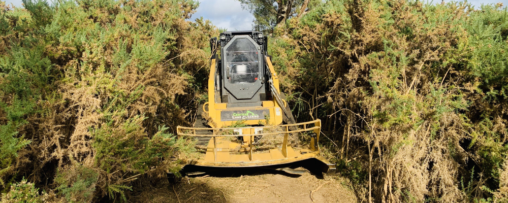 gorse weed management services Melbourne