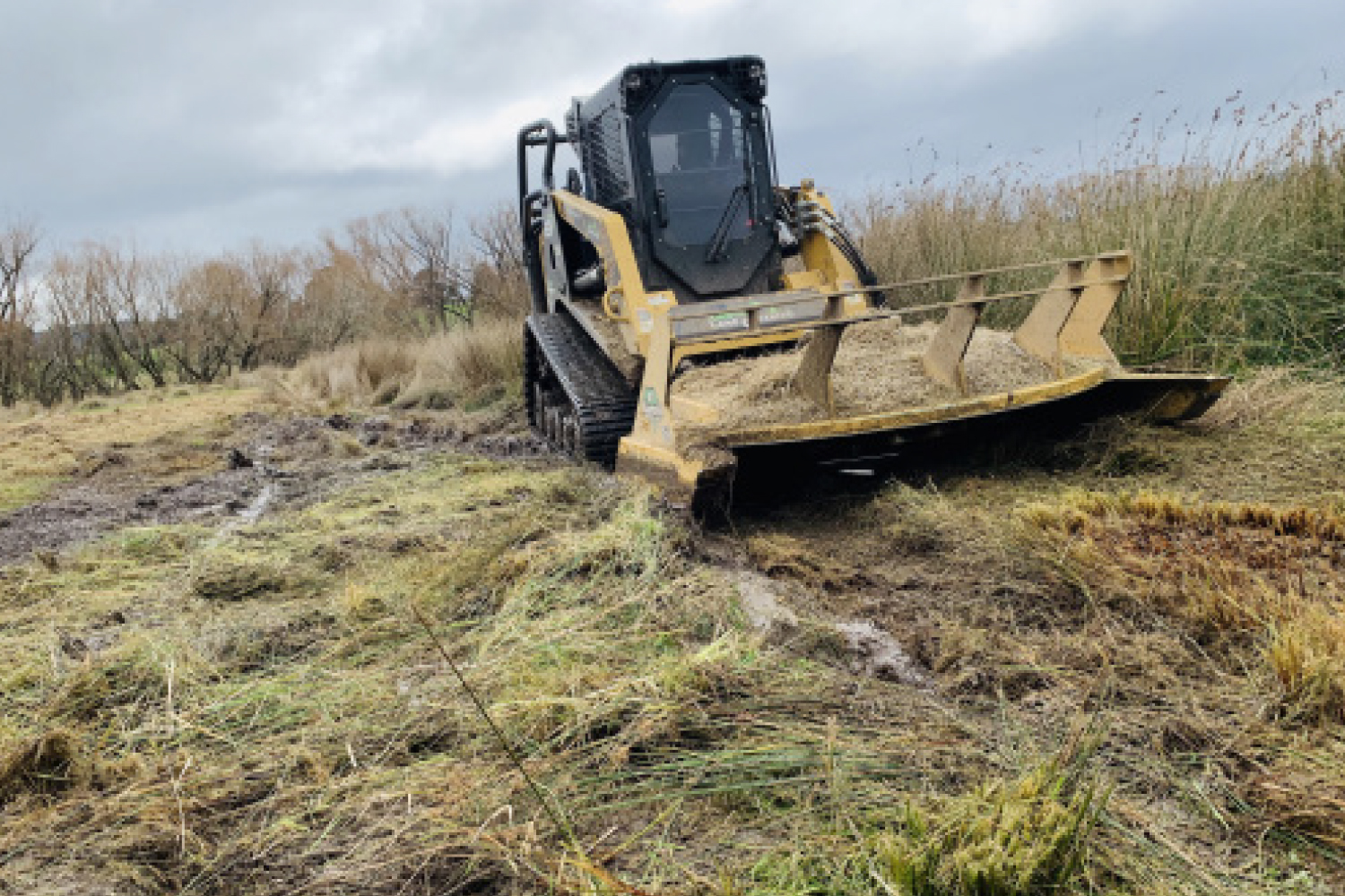 Gorse Weed Management